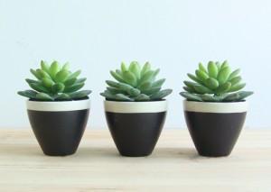 Double Duty Reception Ideas: Succulents