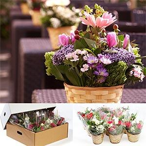 Orted Mini Centerpieces