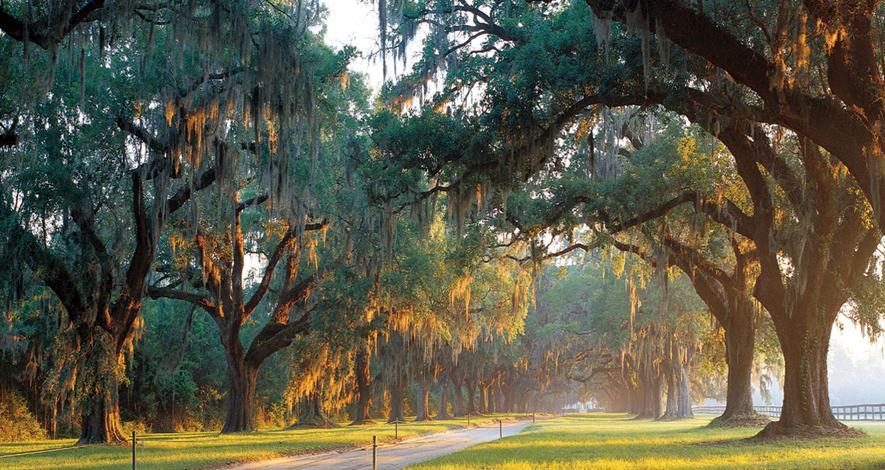 Boone Hall's Avenue of Oaks