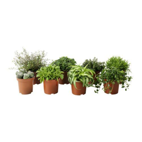 Wedding table decorations potted plants woman getting for Plante ikea