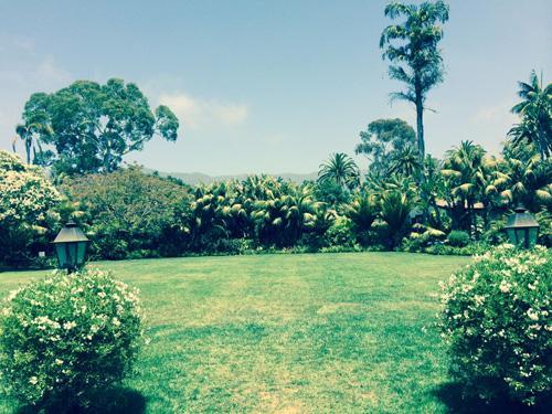 Monte Lawn