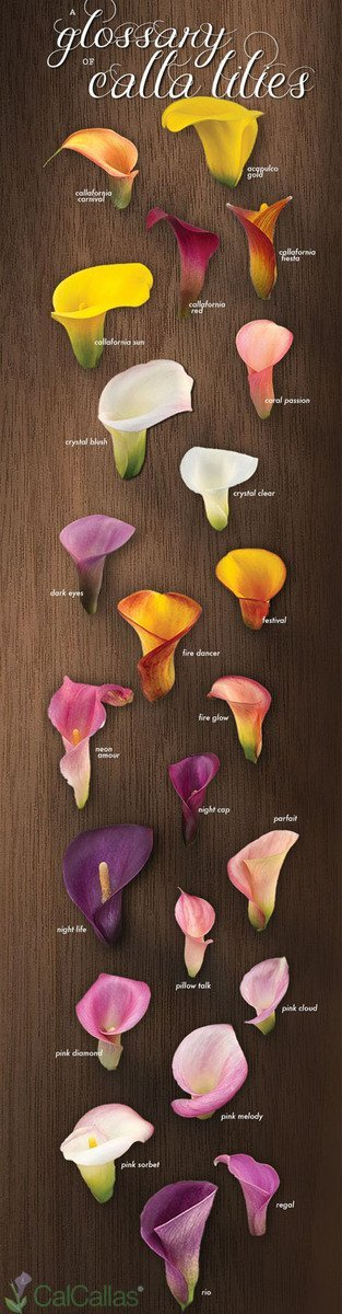 Wedding flowers calla lily woman getting married calla lily izmirmasajfo