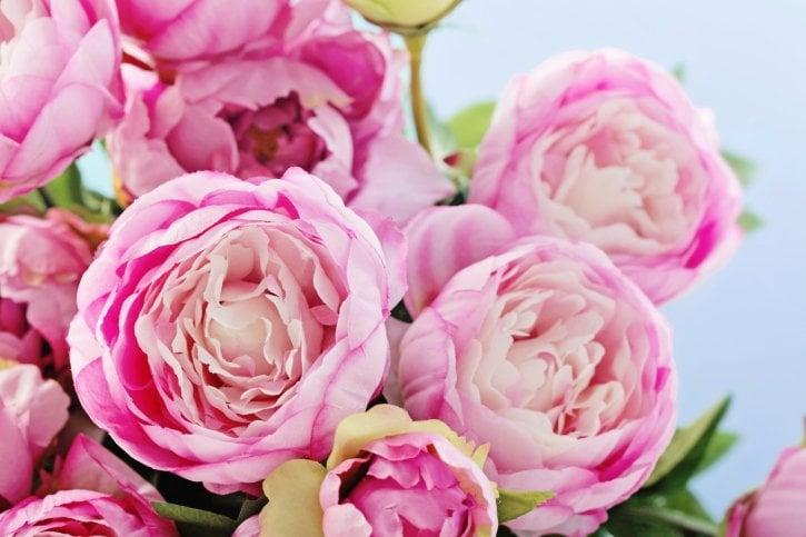 Wedding flowers peonies woman getting married for Pfingstrosen dekoration
