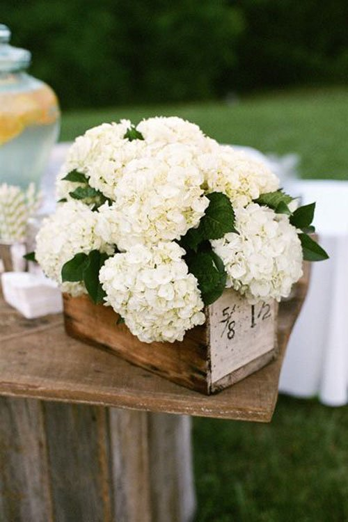 Wedding Flowers Hydrangeas Woman Getting Married