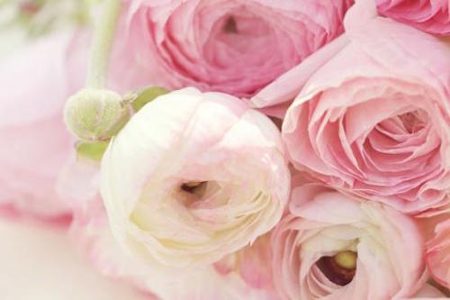 Wedding Flowers: Ranunculus