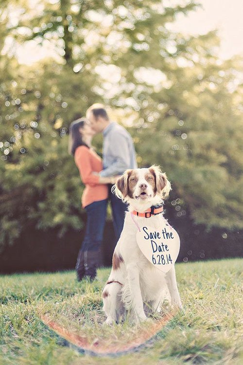 Pet Save the Date