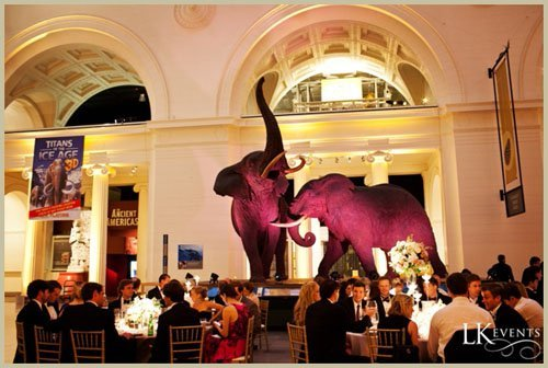 field museum wedding