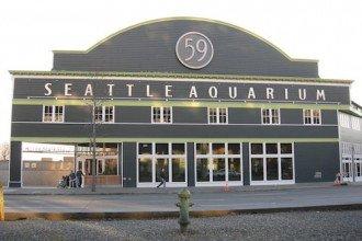 seattle-aquarium-wedding
