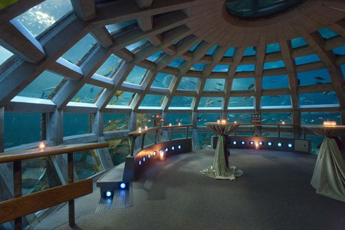 seattle aquarium wedding venue 001