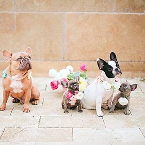 Adorable Wedding Dogs