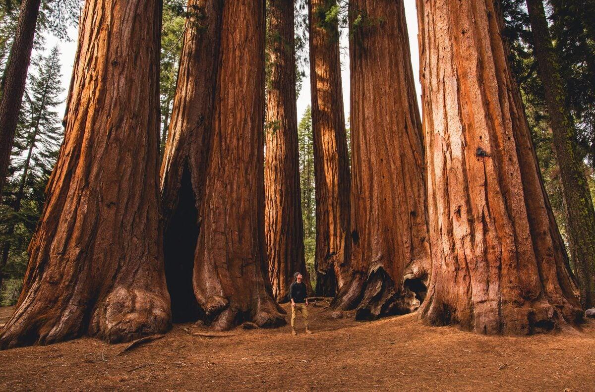 Sequoia national park weddings